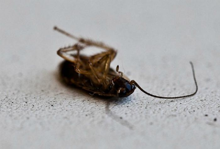Борьба с насекомыми в доме. | Фото: Полезные советы.