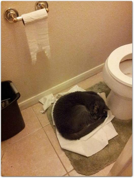 Нашел свое место в жизни. | Фото: Weird Funny Pictures.