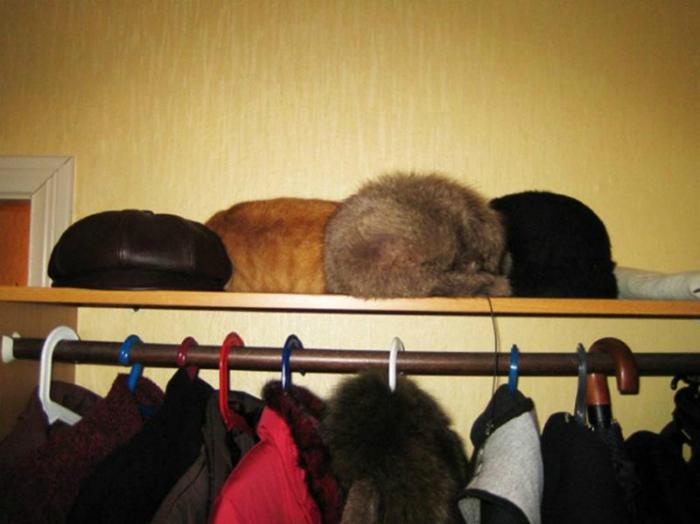 Коты и шапки.