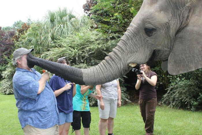Страстный поцелуй слона. | Фото: Reddit.