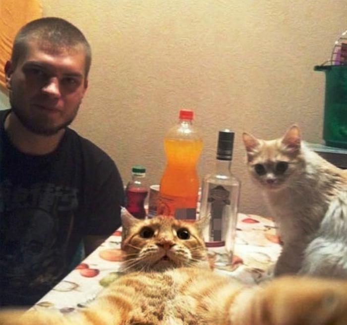 Кот ученый и обученный.