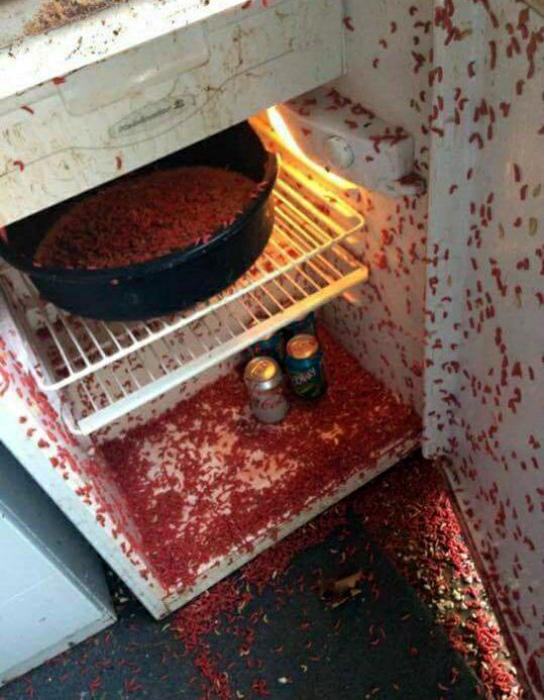 Холодильник рыбака.