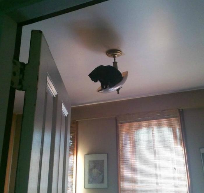 «Хозяин зайдет, а ему на голову ка-а-а-к прыгну!» | Фото: Demotywatory.