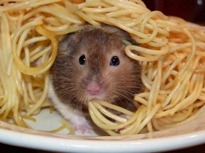 Хомяк в спагетти.