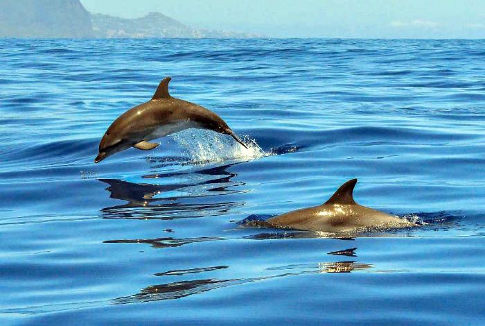 Все дельфины имеют имена и откликаются на них.