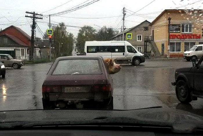 Забавный пассажир.