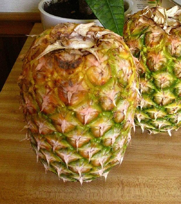 Недозревшие ананасы. | Фото: wnews.site.