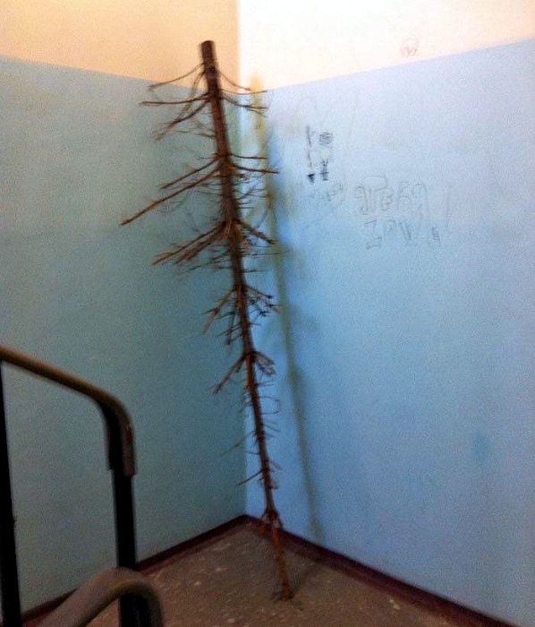 Дерево в подъезде.