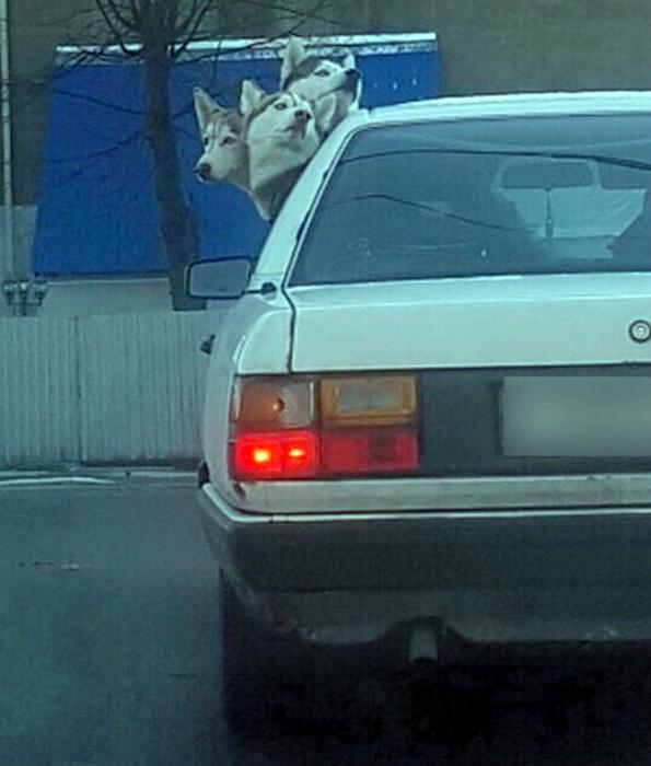 Трехголовая собака. | Фото: Picdeer.