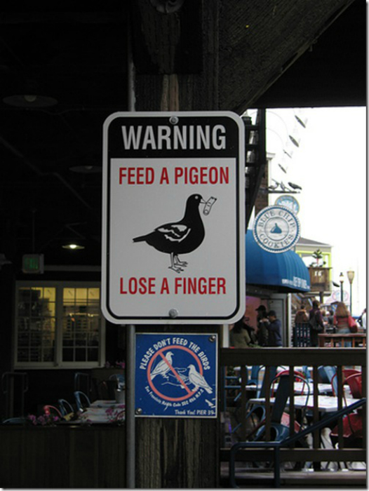«Покормил голубя - лишился пальца».