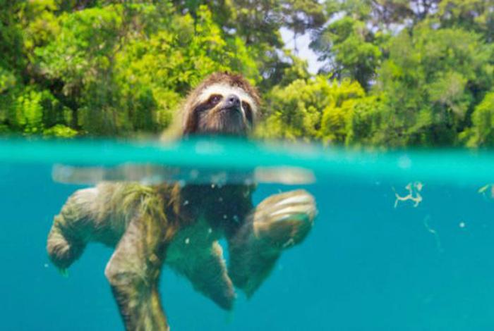 Суперспособность ленивцев. | Фото: Fishki.net.