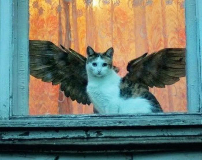 Крылатый кот.