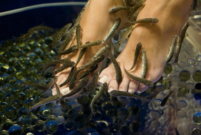 Фиш-пилинг для ног. | Фото: Женский портал о ногтях.