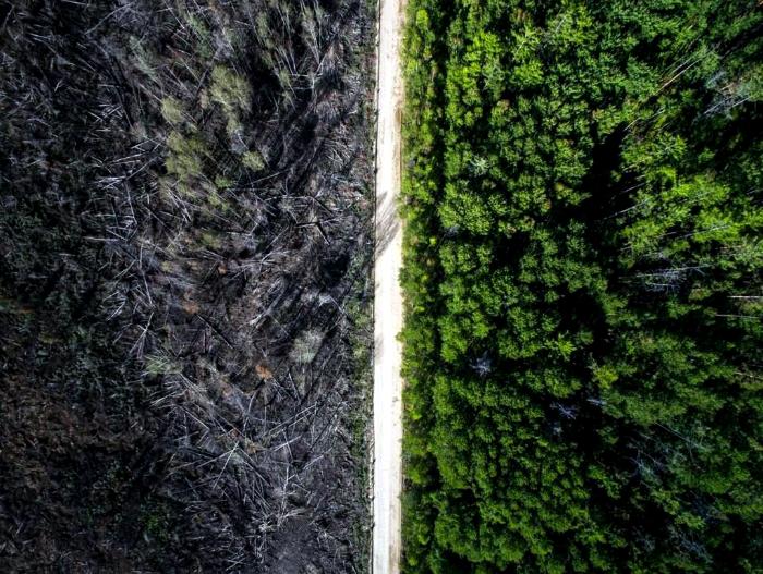 Между двумя лесами.