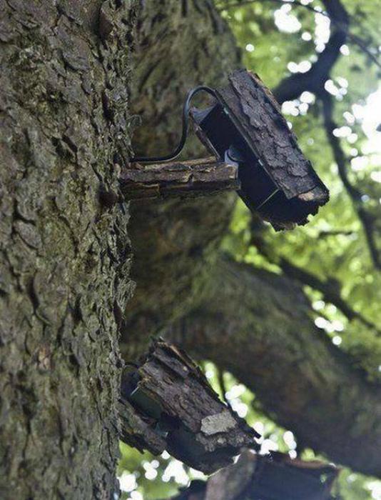 Тонкости видеонаблюдения в лесу. | Фото: Reddit.