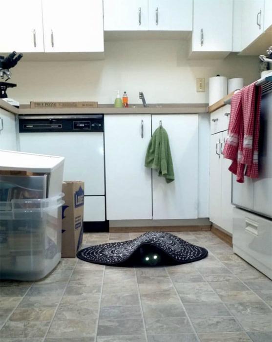 Зло под ковриком. | Фото: Buzzly.