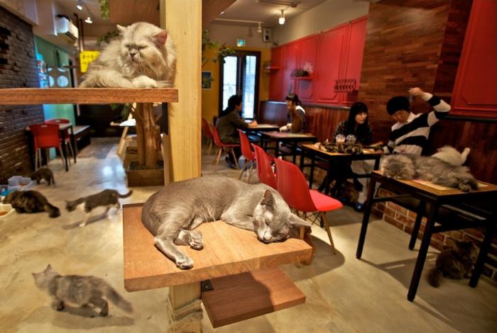 Кафе с котами.