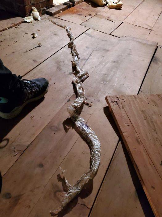 Неприятная находка на чердаке. | Фото: Izismile.com.