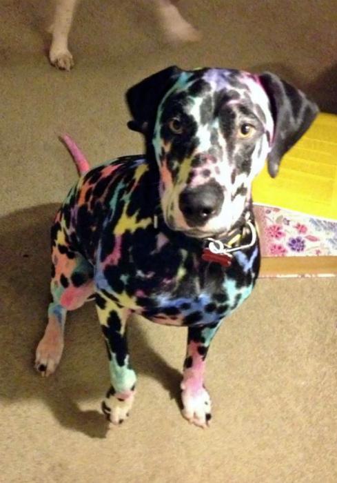 Разукрасил собаку.