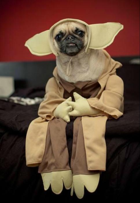 Собака фаната Звездных воин.