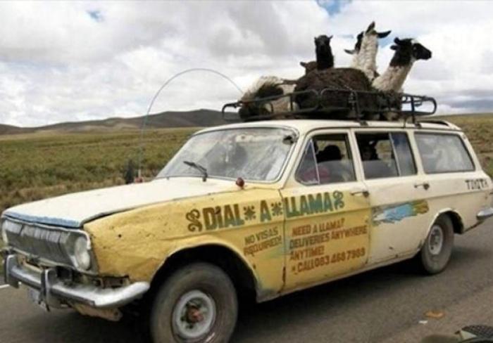 Сервис по доставке лам. | Фото: Cabroworld.