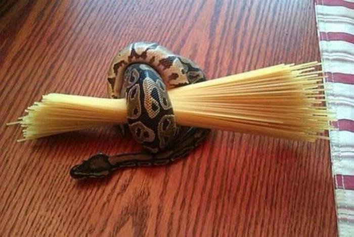 Фиксация спагетти.