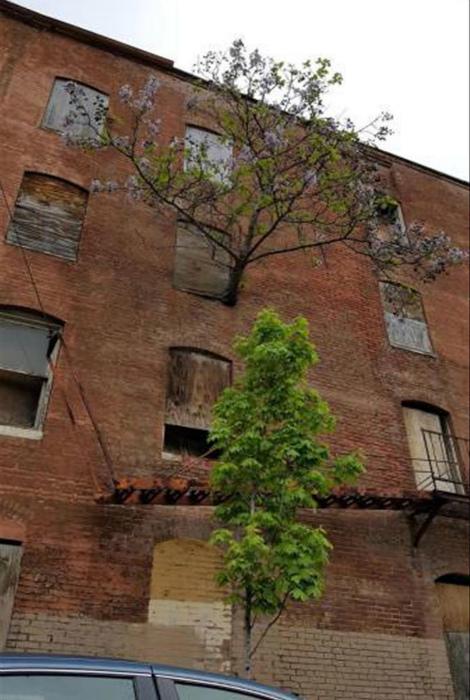 Дерево, растущее сквозь окно.