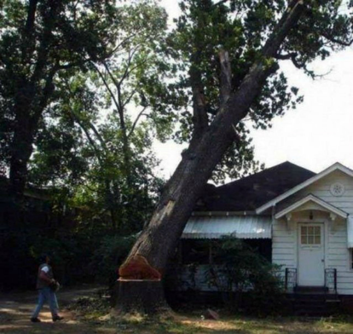 Прощай старое дерево, здравствуй новый дом. | Фото: Humor.fm.