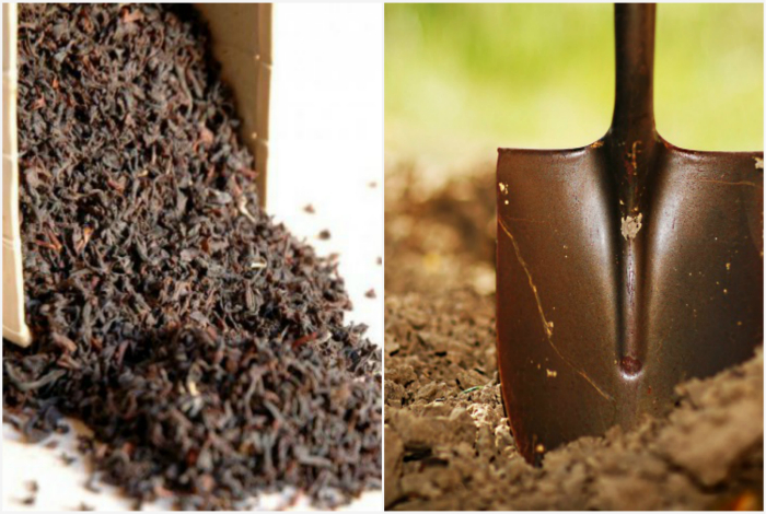 Использованная заварка, как удобрение для огорода.