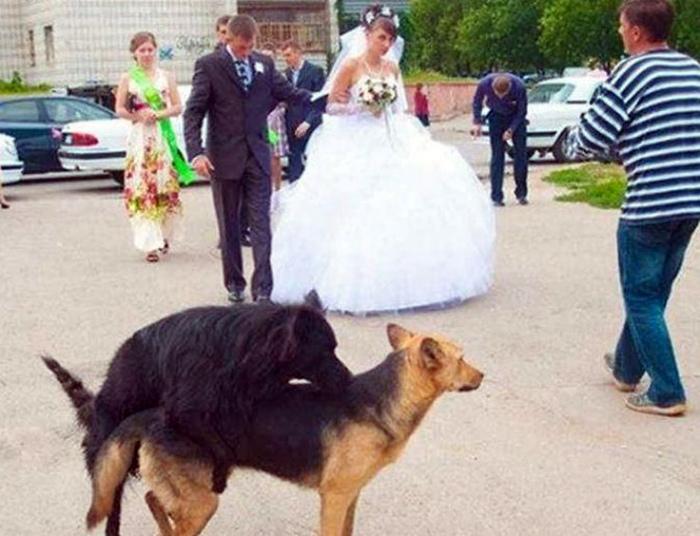 Счастливые собаки.