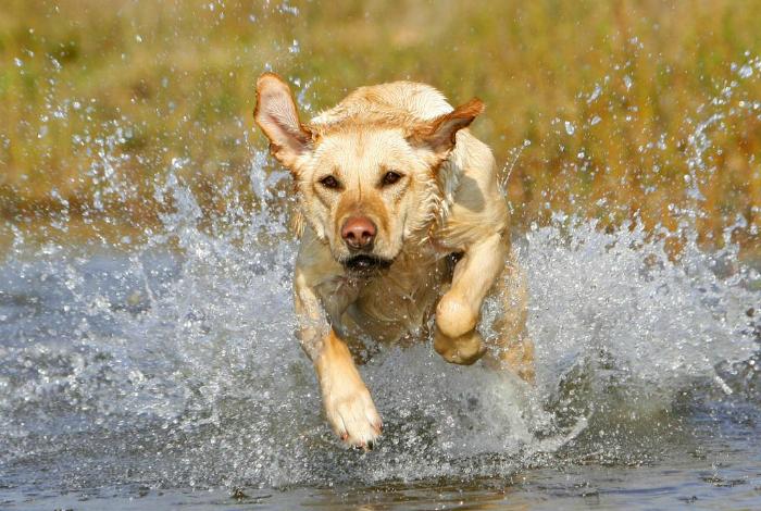 Самые лучшие охотничьи породы собак.