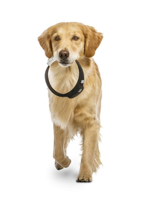 Функциональный электронный ошейник для собак - Voyce.
