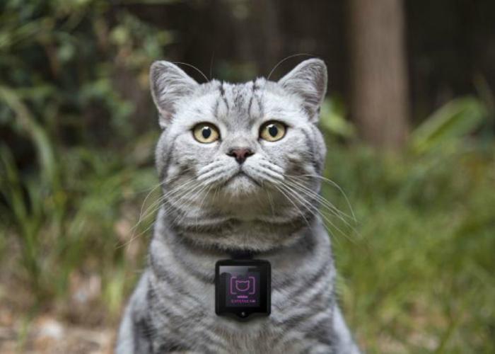 Необычная функциональная фотокамера для кошек - Whiskas Catstacam.