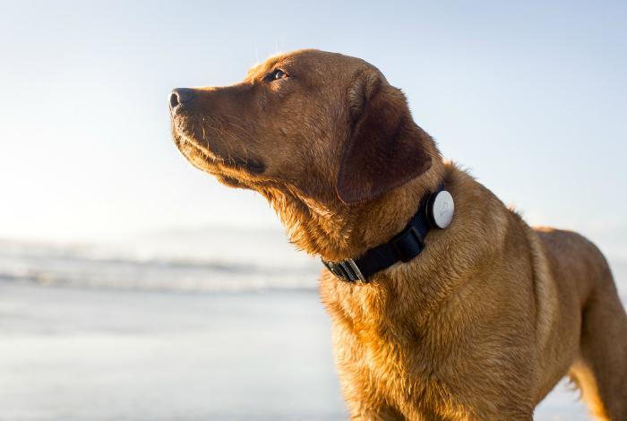Медицинский девайс для отслеживания состояния домашних собак - Whistle.