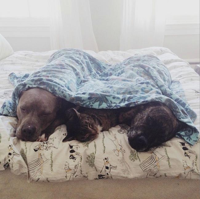 Они готовы делить одеяло с кем угодно.