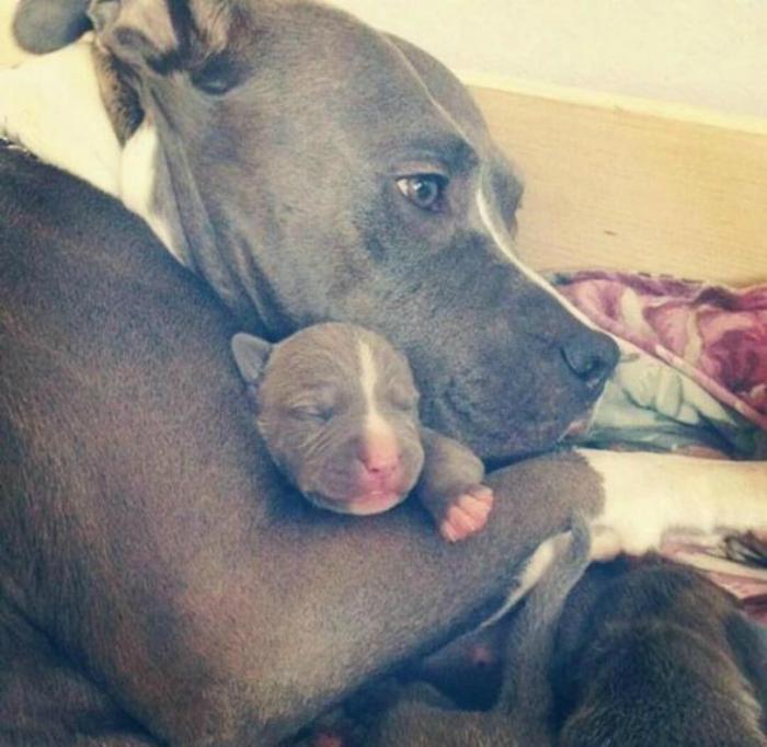 Они самые лучшие матери.