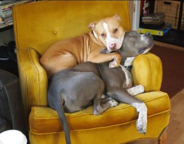 Очень компанейская собака.