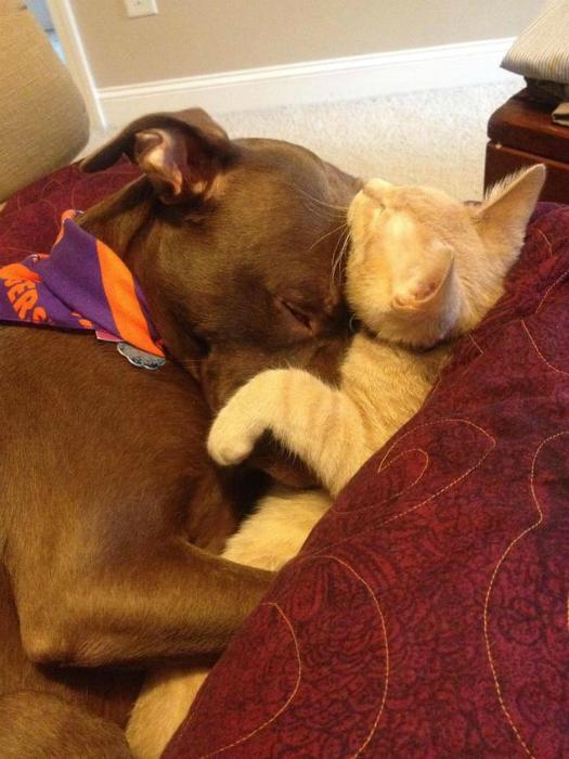 Они разделят свою подушку даже с котёнком.