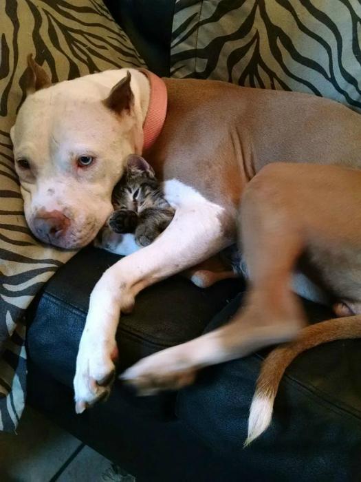 Они могут обнять котёнка.