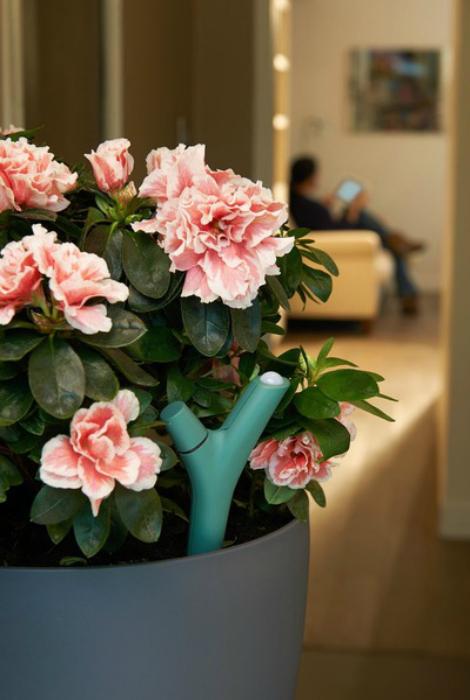 Удобный компактный датчик для цветов под названием - Parrot Flower Power.