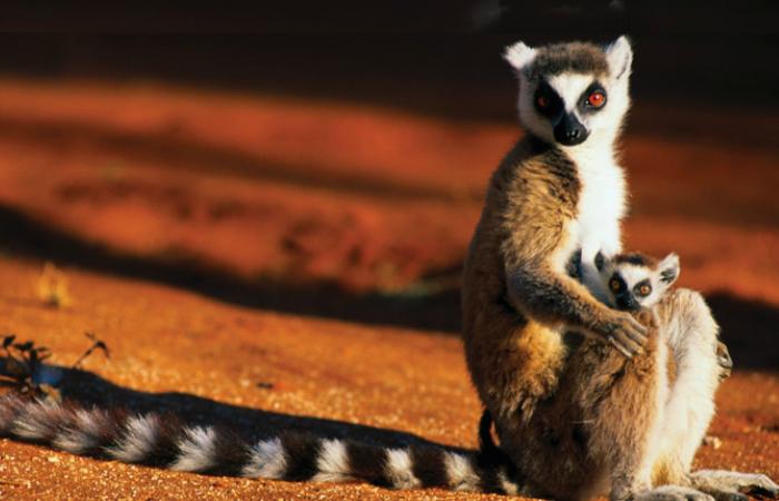 Мадагаскар, восточный берег Африки.