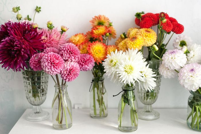 Яркие хризантемы и пионы