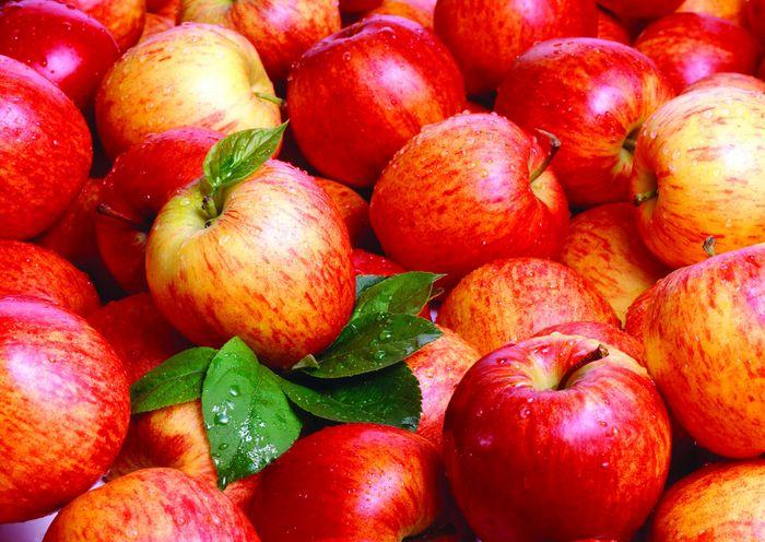 Яблоки не для всех