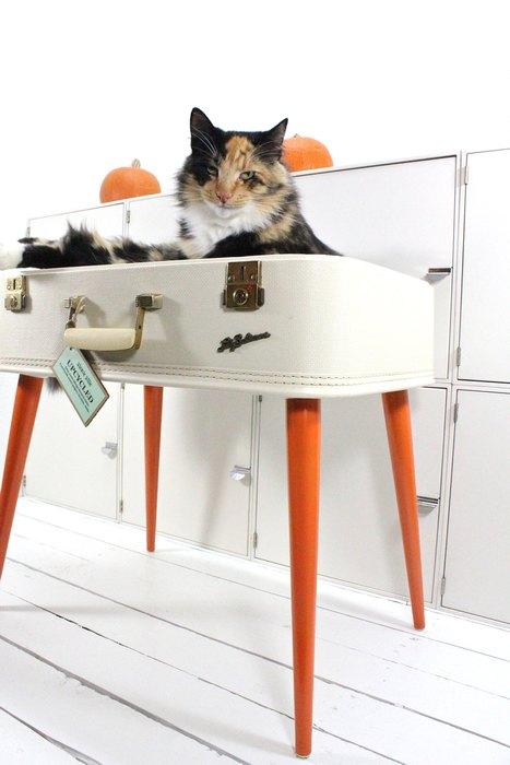 Кот, которому очень нравится чемодан
