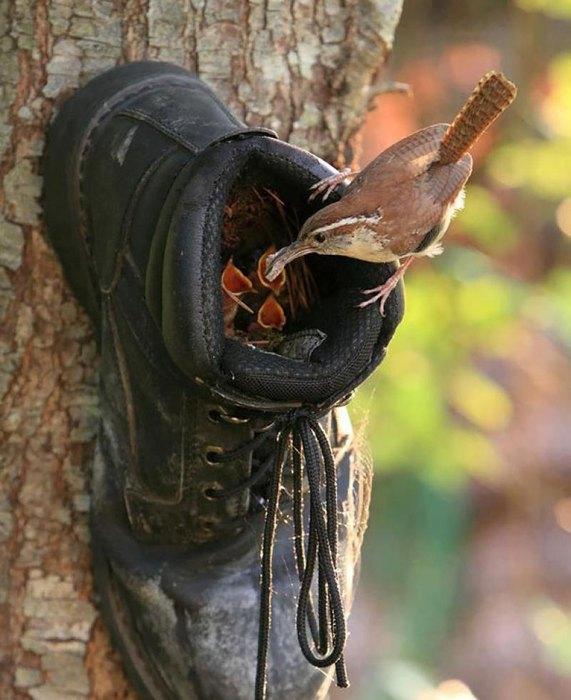 Птичий домик в ботинке