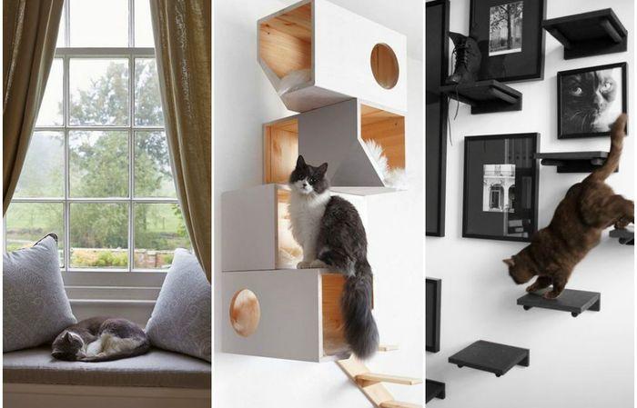Жизнь кошки в маленькой квартире: несколько простых шагов к комфорту питомца