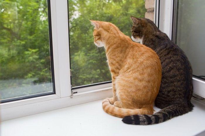 Коты любят проводить время на подоконнике