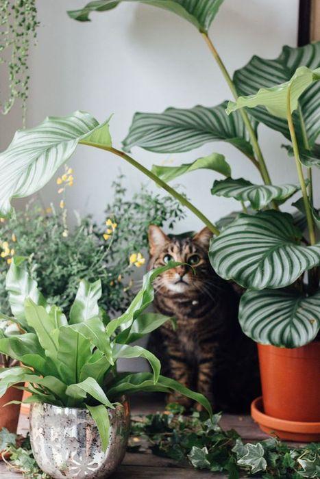Домашние джунгли