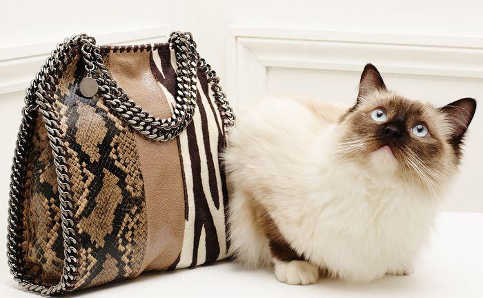 Кошка-модель в новом lookbook Stella McCartney