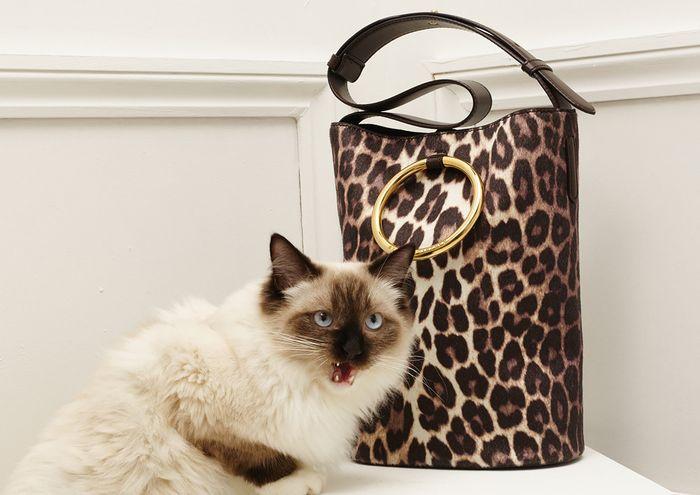 Очаровательная кошка в роли модели